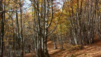 Permalink to: Trekking in Toscana
